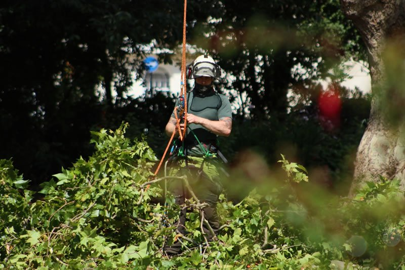 Tree Pruning, London and Surrey